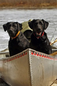 dogs in the boat